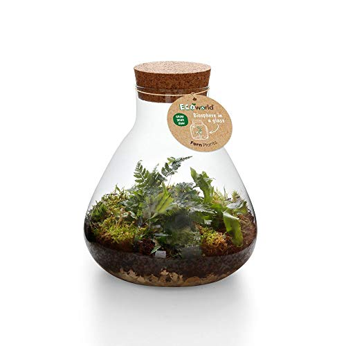 Ecoworld Jungle Biosphere - Komplett DIY Flashengarten Set Inklusive Pflanzen - Pyramid Glass Ø 23 cm Höhe 26 cm
