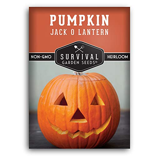 Survival Garden Seeds - Jack-O-Lantern Pumpkin Seed for Planting - Packet with Instructions to Plant and Grow in Your Home Vegetable Garden - Non-GMO Heirloom Variety