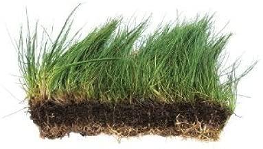 Dwarf Hairgrass on 3 x 5 mat - Foreground Carpet Aquarium Plant