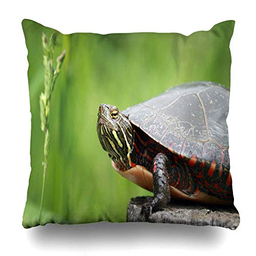 Throw Pillow Cover Plant Turtle Nature Amphibian Summer Tree Trunk Design Home Decor Pillow Case Square Zippered Pillowcase Kissenbezüge