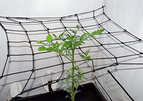 Tech-Garden Black Orchid 80 x 80 cm Hydroponic Grow Room Scrog Net Tent Plant Support Netting Elastic Hooked Grid Trellis Small