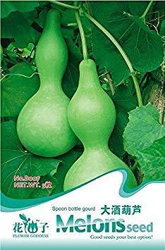 ASTONISH Sgomento SEMI: vendita 100 / bag salute balcone di semi di asparagi sementi di ortaggi in vaso, dolce viola/semi di asparagi verdi, 15pack