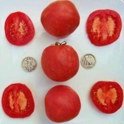 Peach Coup Sutton tomate Graines Fuzzy peau, 40 pcs