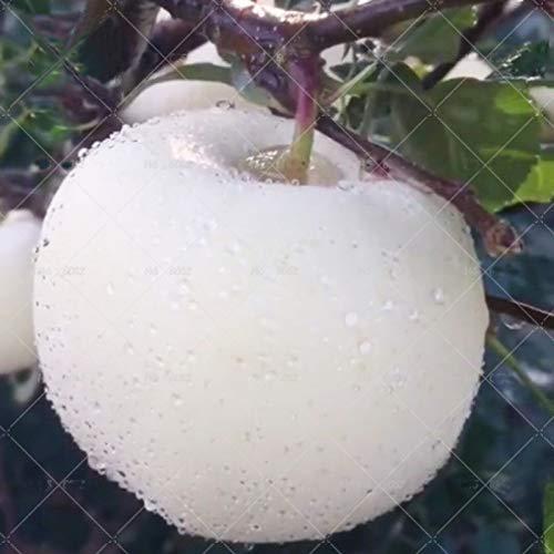 TENGGO Egrow 30 Piezas/Paquete Manzana Semillas Raro Manzana Blanca Bonsai Árbol frutal Bonsai Manzana Plantas en macetas perennes DIY Plantación de jardín casero
