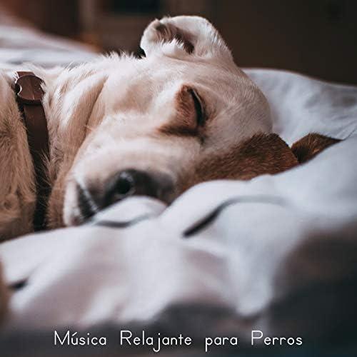Música Relajante para Perros, Música para Relaxar Maestro & Música Para Meditar y Relajarse