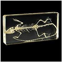 リザードスケルトン埋め込まれた生物学的標本-リザードスケルトン自然骨モデル動物スケルトンモデル-透明な樹脂標本リアルリザードスケルトンモデル