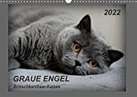 GRAUE ENGEL Britischkurzhaar-Katzen (Wandkalender 2022 DIN A3 quer): Traumhafte Portraetfotos von Britischkurzhaar-Katzen (Monatskalender, 14 Seiten )