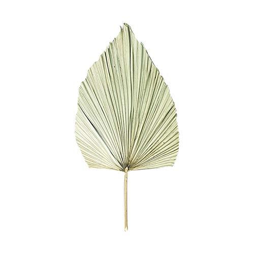 circulor-123 Hojas de Palma secas Naturales Pampas Hierba Flores secas secas decoración DIY Hojas de Abanico de para decoración de Arco de Boda