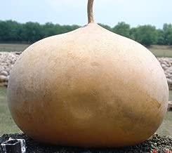 Best bushel gourd seeds Reviews