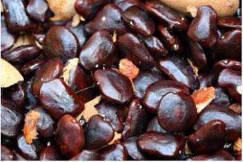 Farmbright - Fresh and Healthy IMLI Seed - Tamarind Seed For...