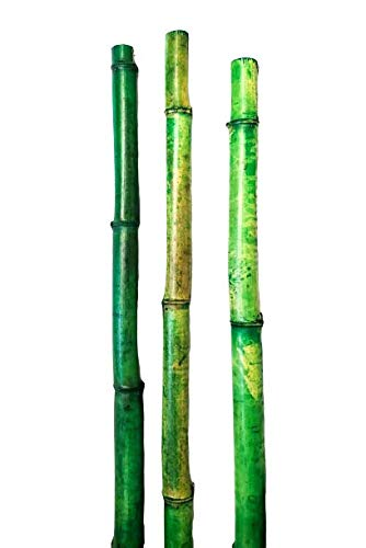 1000 bamboo stakes - 5
