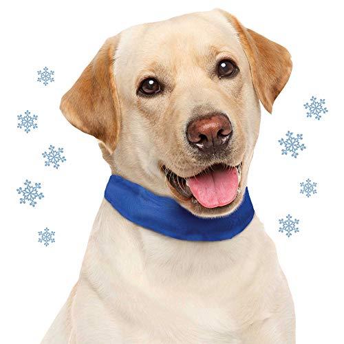 Schecker Kühl Halsband M/L Kühlhalsband für Hunde Zur Unterstützung der Temperaturregulation des Hundes Sofort einsetzbar