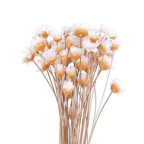 XUENING JWGD 50Pcs Schöne brasilianische Kleine Stern-Blumen-Ornamente Getrocknete Blumen Blumenstrauß Anordnung Blumen Hauptdekor (Farbe : Weiß, Größe : 41x6.5cm)