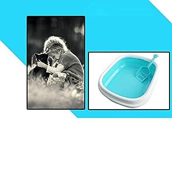 ZXL Cat Litter Box Pet Supplies Litière pour Chat Bassin de lit Toilette pour Animaux de Compagnie Semi-fermée Bassins pour Chat Portable Pet Supplies Litière et éducation Domestique Litière pou