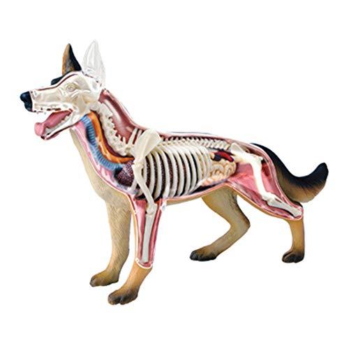 N \ A 4D Vision Hund Anatomie Modell Tier Anatomie Für Kinder, Hund Anatomisches Modell Kit, Lernspielzeug, Pädagogisches Puzzle Montage Kit...