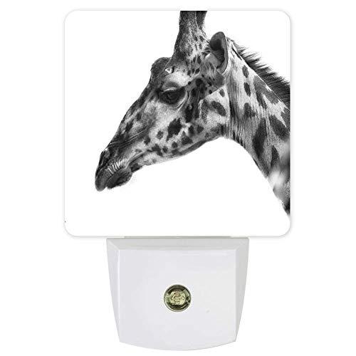 Luz nocturna cuadrada con sensor de anochecer a amanecer para niños, escaleras, jirafa blanca y negra de primer plano, luz nocturna, luz suave para guardería, pasillo