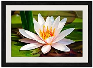 Water Lily - Art Print Wall Black Wood Grain Framed Picture(20x14inch)