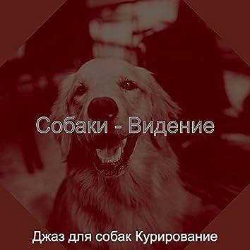 Собаки - Видение