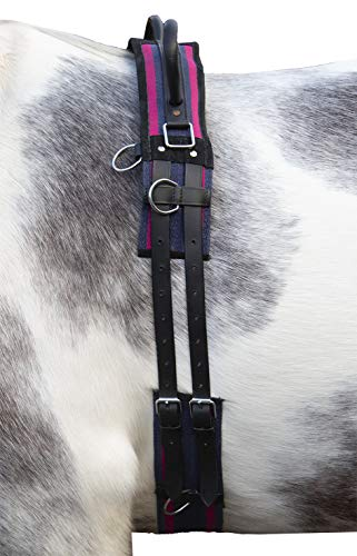 HKM 12701 Longiergurt Canvas, Fester Doppelgriff Longierbedarf Navy/Passion Pink WB