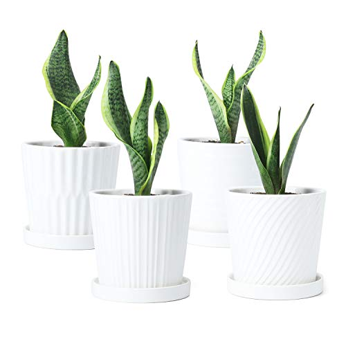 Plant Pots - Greenaholics - 5.1 Inch Cylinder White Ceramic Planters for Succulent or Small Snake Plant, with Connected Saucers - Set of 4
