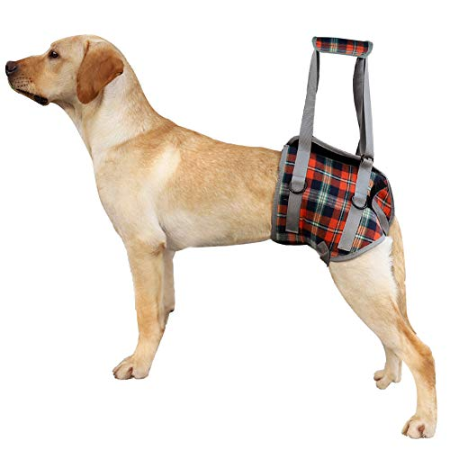 Imbracatura di supporto per cani per la parte posteriore e le zampe anteriori Sollevamento riabilitazione Mesh portatile regolabile imbottita senza tirare con impugnatura per disabili