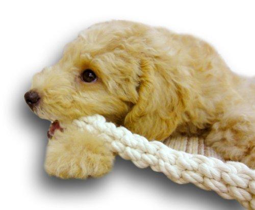 ドギーマン犬用おもちゃ毎日ハミガキコットンループSサイズ