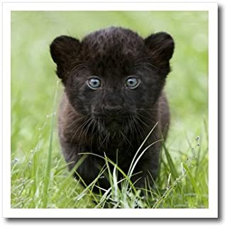3dRose ht_4537_3 Black Panther Cub Iron on Heat Transfer for White Material, 10 by 10-Inch