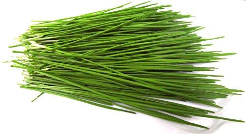 1kg BIO Keimsprossen Weizen Sprossen Superfoods Keimsaat Weizengrassaft Sprossenanzucht