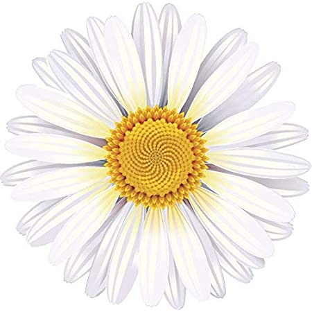 Amazon Com Pretty Classic Flower Cartoon Art Vinyl Decal Sticker 4 Wide Daisy White Arts Crafts Sewing