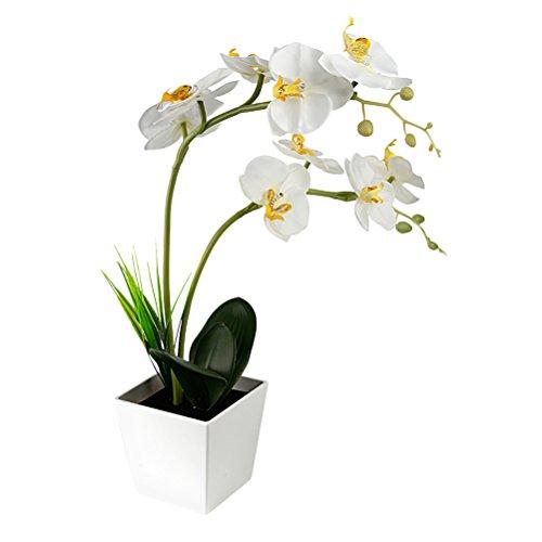 LEDMOMO 9 LED Lámpara de batería con lámpara de orquídeas Artifici