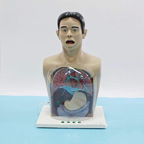 Joyfitness Modelo De Lavado Gástrico Transparente Cuidado del Paciente Maniquí De Enfermería Modelo Simulador De Maniquí para Entrenamiento De Enfermería Enseñanza Suministros Educativos
