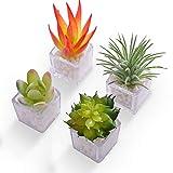 HEY FOLY Cactus Succulent Refrigerator Magnet...