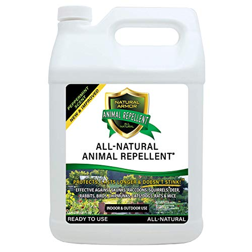 Natural Armor Animal & Rodent Repellent Spray. Repels Skunks, Raccoons, Rats, Mice, Deer Rodents & Critters. Repeller & Deterrent in Powerful Peppermint Formula – 128 Fl Oz Gallon Refill RTU