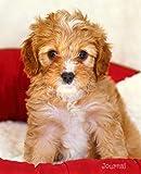 Journal: Cute Cavapoo Puppy Notebook