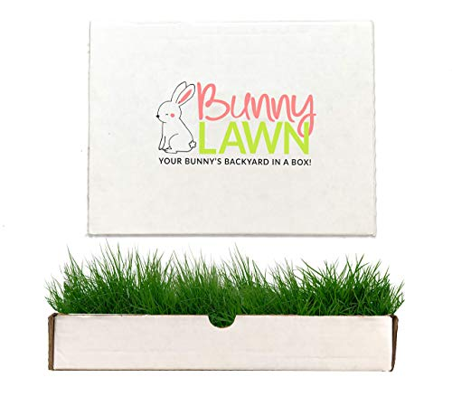 Bunny Lawn Fresh Grass Mat for Your Rabbit, 12 x 9