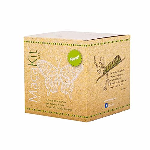 Smart Bugs - MacaKit, Il Kit per Allevare in Casa Le Farfalle della Specie Macaone