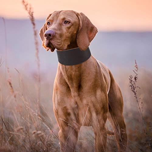 Cuello de Mascotas marrón, Cuero de Vaca Hecho para Perros Material de Calidad para Perros Material Suave Martingale Perro para pequeño Perro Greyhound Whippet con Remache fijando marrón