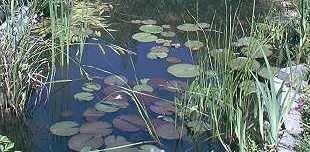 Anti Algen Set für den Teich, Wasserpflanzen, Schwimmpflanzen