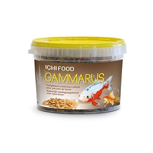 Aquatic science Ichi Food Gammares Nourriture pour Poissons