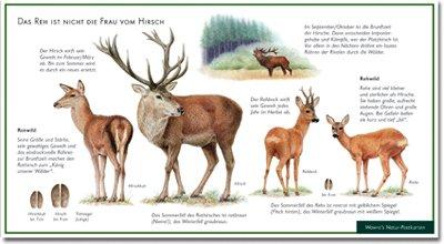 Reh und Hirsch - Rotwild - Rehwild - Das Reh ist nicht die Frau vom Hirsch - Wawra Naturpostkarte zum Entdecken, Beobachten, Bestimmen - 22 cm x 12 cm