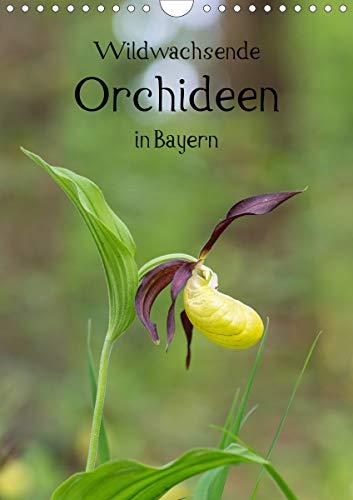 Wildwachsende Orchideen in Bayern (Wandkalender 2021 DIN A4 hoch)