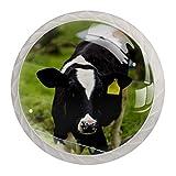 Redondo Blanco pomos Ternero Vacas Lecheras Jóvenes para muebles de habitación infantil, para habitación infantil, armarios, cajones, baúles (4pcs) 35mm