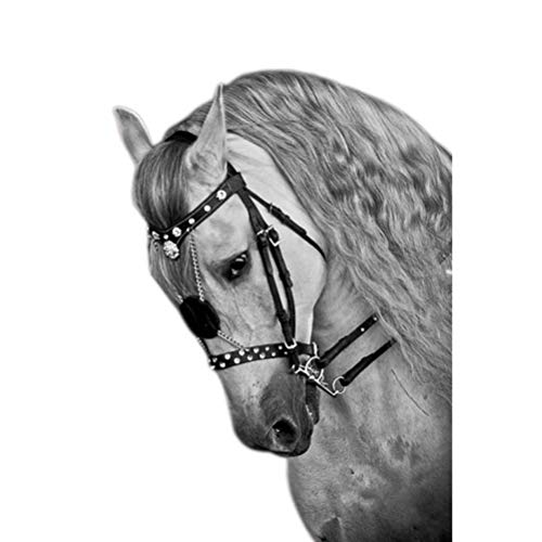 Phayee Cuerda de equitación, Accesorios de equitación, Cuerda de Caballo, Equipo de equitación, Accesorios de Cabeza de Caballo duraderos y Ajustables Cabestro de Caballo