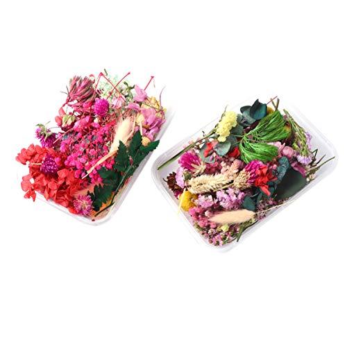 Healifty 2 scatole di fiori secchi naturali veri fiori pressati misti per la disposizione fai da te per arte artigianale candela scrapbooking colore casuale