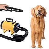 Asciuga Cani Soffiatore Pet Dry Pulsore Phon per Cani Gatti Animali Potenza 2800 W con Accessori 3 Beccucci 2 velocità e 2 Temperature Selezionabili