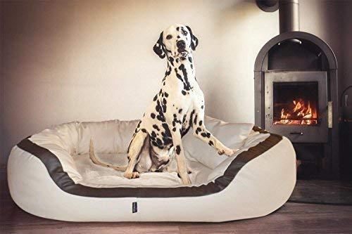 tierlando Pepe Ortopedico Divano per Cani in Similpelle 13cm Potente Materasso Visco XXL-KUSCHEL-Rand Anti-Capelli Forma Stabile - Crema, 110 x 85 x 30 cm | Innenmaß: ca. 70 x 45 cm