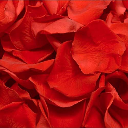 Pétalos de Rosa Preservados. Pétalos de Rosa Reales. Color: Rojo Clásico. 1 Litro. 70/90 gr. 150/200 Pétalos