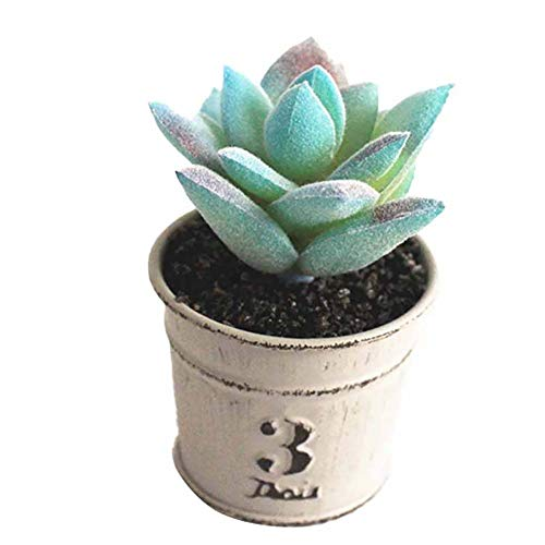 Ynnxia Mini kleine Eisen Topfpflanze Topf Plastikblume Hauptinnen- und im Freienblumentopf Kreative Simulation Blumentopf Saftige kreative Ornamente im Topf