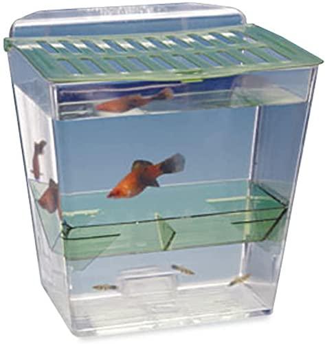 of penn plax aquariums dec 2021 theres one clear winner Penn-Plax Breed N' Show Fish Tank – Multipurpose Enclosure That Mounts Inside an Established Aquarium –Breeding Trap, Fry Nursery, or Isolation Trap