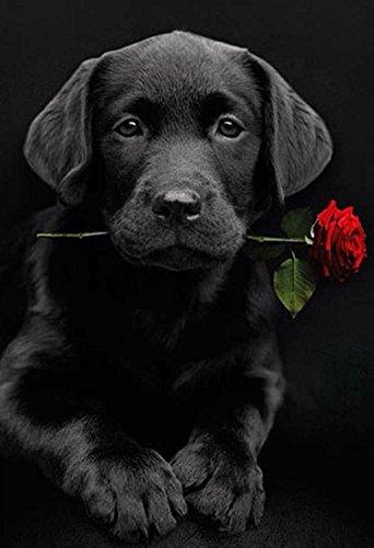 Proyecto de manualidades,DIY 5D Kit de pintura de diamante por número cuadro mosaico de cuentas en 5D con diseño de un perro labrador con una rosa, para decoración mural del hogar 40 x 30 cm